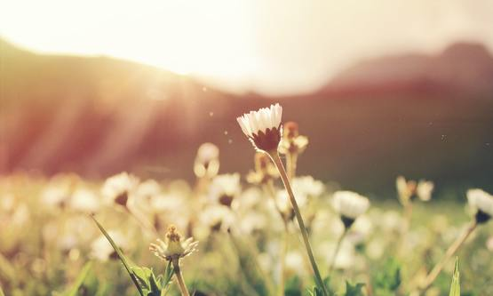 Prachtige bloemen postelhoef